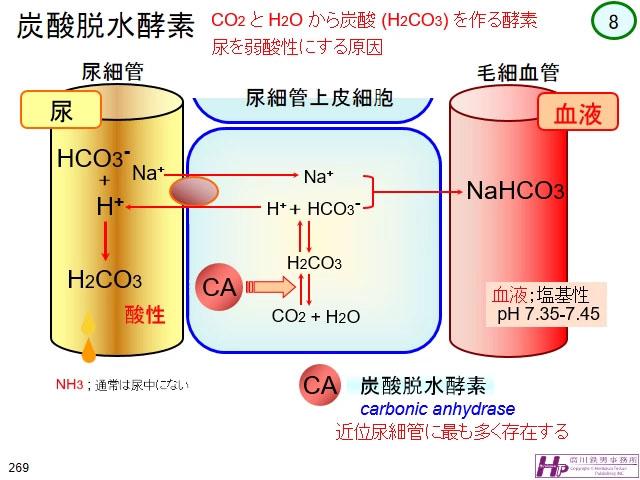 10-3-6 炭酸脱水酵素の役割