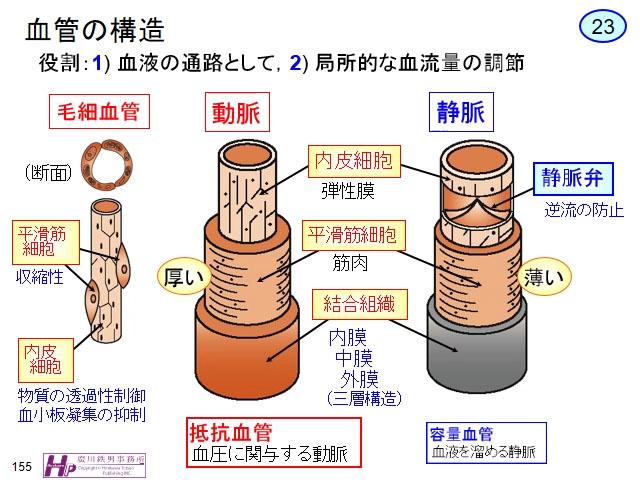 5-2-1 血管の種類末梢の細動脈,...